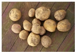 7 Ways To Grow Potatoes | Gardening is more than Digging the Dirt | Scoop.it