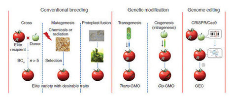 A proposed regulatory framework for genome-edited crops - Nature Genetics | genome editing | Scoop.it