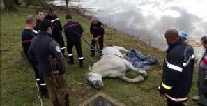 Un cheval de trait secouru de la vase par un tracto-pelle | Ladepeche.fr | Cheval | Scoop.it