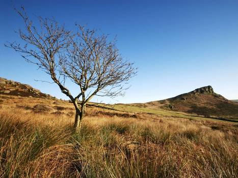 Government's growth drive means England's most treasured landscapes can be 'vandalised' by developers | Conservation - National Parks - Environnement | Scoop.it