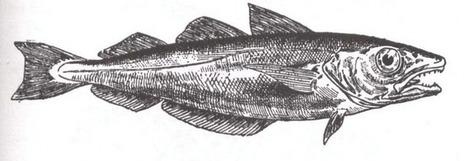 Le merlan,poisson d'hiver en mer sa pêche | Ma boite à pêche | Scoop.it