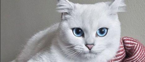 Consegue olhar para este gato sem ficar hipnotizado?   Tudo sobre hipnose...   Scoop.it