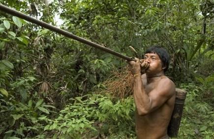 La Colombie va planter 8 millions d'arbres pour la paix - Magazine GoodPlanet Info | Biodiversité | Scoop.it