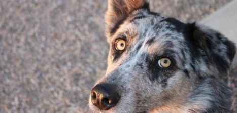 NuVet Labs Reviews : How to Get Your Pet Rid of Ear Mites | nuvetlabs reviews | Scoop.it
