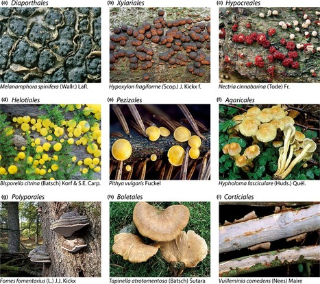 Citizen science data reveal ecological, historical and evolutionary factors shaping interactions between woody hosts and wood-inhabiting fungi | MycorWeb Plant-Microbe Interactions | Scoop.it
