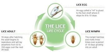 Best Skin Care product order online : Hair care: Head Lice Prevention | nestpillmart | Scoop.it