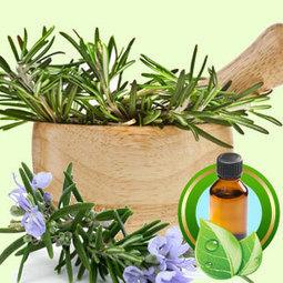 Rosemary Tunisian ESSENTIAL OIL | Essential-Oils | Scoop.it