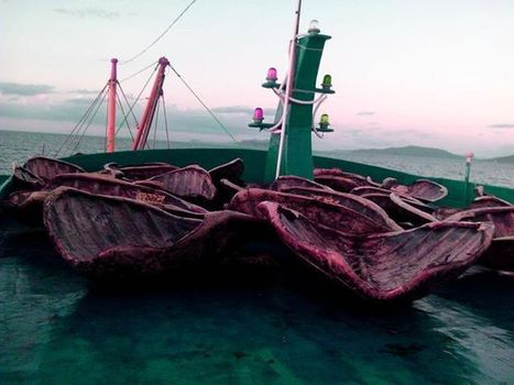 Photos of #dead #turtles in #Chinese ship #anger #Filipinos !!! | Now is the Time to Help our Oceans & it's Species ! | Scoop.it