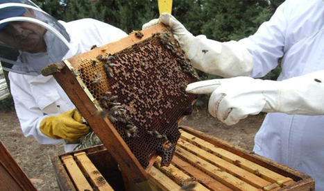 Las colmenas urbanas pueden salvar a la apicultura mundial. | Cultivos Hidropónicos | Scoop.it