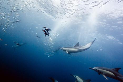 #Oceans Storing Earth's Excess Heat in Leaked UN Report - Bloomberg | Marine life | Scoop.it