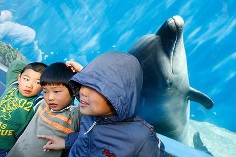 Aquariums Deal Big Blow to Dolphin Slaughter in Taiji | All about water, the oceans, environmental issues | Scoop.it
