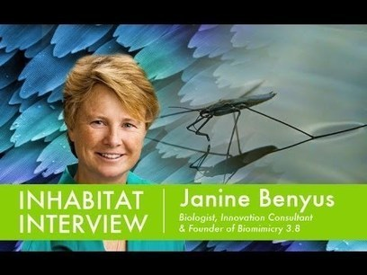 Inhabitat Interview with Janine Benyus, Founder of Biomimicry Institute - YouTube | Sustainable Futures | Scoop.it