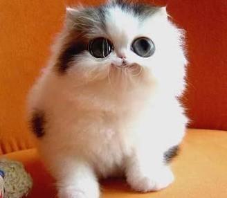 NuVet Plus - Labs Reviews | Strange Behaviour of Your Cat | nuvetlabs reviews | Scoop.it