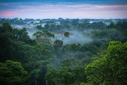 Mengenali Fungsi Hutan Bagi Kehidupan   Pemanasan Global   Scoop.it