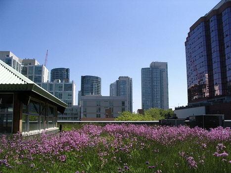 Chez vous - Convertir votre toit en jardin | Les colocs du jardin | Scoop.it