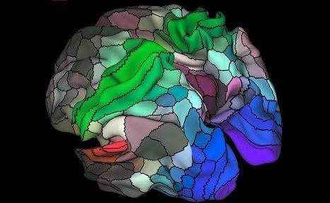 Actualizan mapa del cerebro humano | Biología de Cosas de Ciencias | Scoop.it