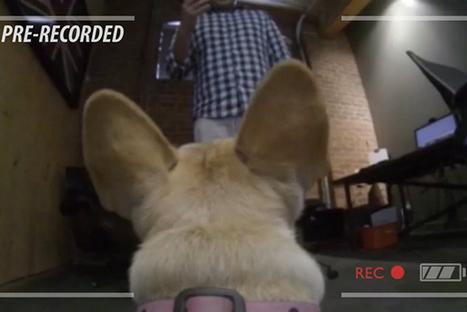 Chaque vendredi, cette agence attache une GoPro sur un chien pour filmer la vie de bureau !   Geeks   Scoop.it