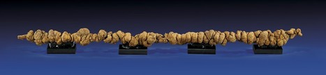 33-Million-Year Old Poop Expected to Fetch $10,000 (€7,393) at Auction | Strange days indeed... | Scoop.it