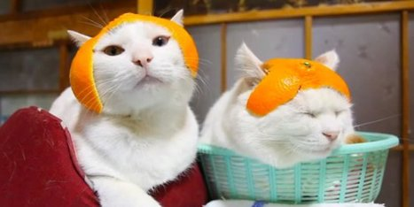 These Cats Are So Zen | Womens' Hats | Scoop.it