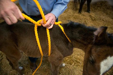 UC Davis Today: Newborn horses give clues to autism | UC Davis | Pet Sitter Picks | Scoop.it