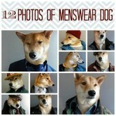12 Photos of Menswear Dog, the Most Dapper Dog Around - Babble | hot and fressssy | Scoop.it
