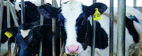 A Monts (37) : Encore plus fort que laferme des 1000 vaches… | C'était un petit jardin... | Scoop.it