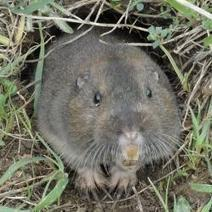 How to Get Rid of Gophers   Outdoor Living   Scoop.it