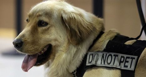 TSA seeks homes for dogs who flunked training or retired | Compassion in Action | Scoop.it
