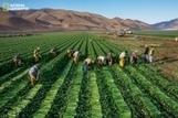 La FAO et National Geographic collaborent pour explorer l'alimentation du futur | Managing the Transition | Scoop.it