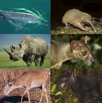 Sabias que en el planeta viven 8.700.000 especies distintas | Noticias de ecologia y medio ambiente | Infraestructura Sostenible | Scoop.it