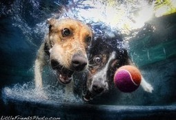 12 Underwater Photos of Dogs Fetching Their Ball | Uncommon but Notable | Scoop.it