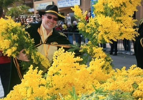 France Festivals | The Mimosa Fete, French Riviera | The Good Life France 2013 Fête du Mimosa February 15 – 24. | France Festivals | Scoop.it