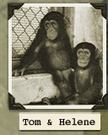 The Last Thousand Research Chimpanzees Must Not Be Forgotten | Animals R Us | Scoop.it