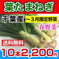 葉たまねぎ千葉県おいしく通販 | youhana2109 | Scoop.it