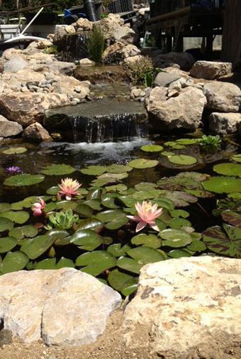 Custom pond: koi pond   Pond Talk   Scoop.it