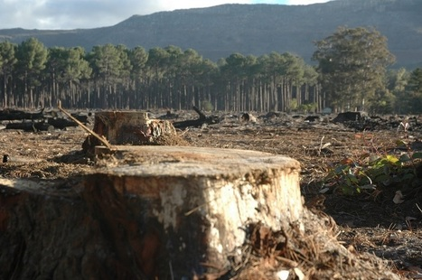UP Magazine - Starling ou l'innovation technologique au service de la forêt   Initiatives pour un monde meilleur   Scoop.it
