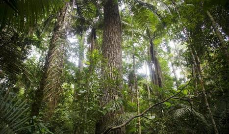Mapping Rain Forests to Fight Climate Change | Rainforest EXPLORER:  News & Notes | Scoop.it
