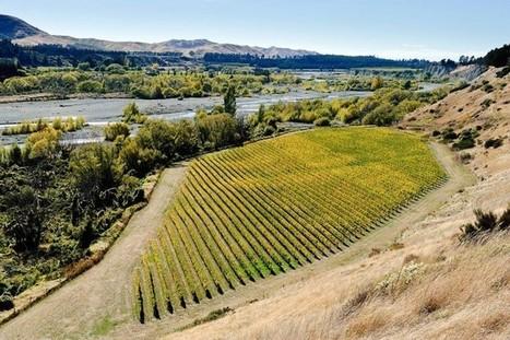 80 % des vignes bio se trouvent en Europe - petit tour des vignobles du monde. | Le Vin et + encore | Scoop.it