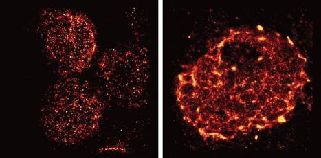 Super-resolution microscopy reveals unprecedented detail of immune cells' surface | immunology | Scoop.it