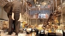 New chairman appointed to take over at National Museum of Scotland | Culture | Scotland on TV from STV | Culture Scotland | Scoop.it