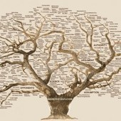A Complete Tutorial on Tree Based Modeling from Scratch (in R & Python) | Data is big | Scoop.it