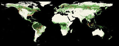 Les forêts mondiales sous l'œil de Google | Environnement | Scoop.it