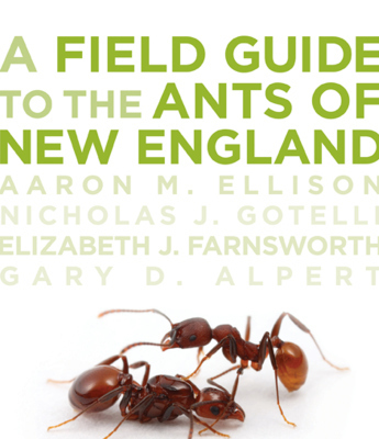 Warm Ants: Climate Change and New EnglandAnts | All About Ants | Scoop.it