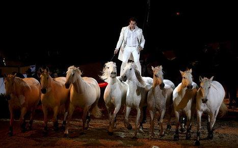 Avignon : 50 nuances de passion du cheval | Salon du Cheval | Scoop.it