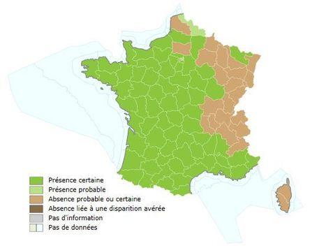 Frelon asiatique. Carte de répartition en France métropolitaine et Corse au 10.09.2015 | EntomoNews | Scoop.it