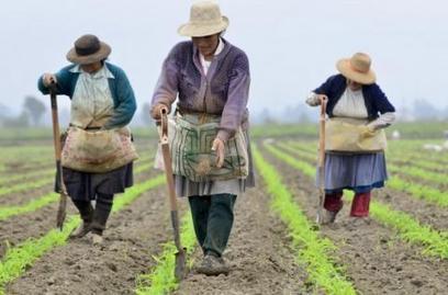 Cinco innovaciones que revolucionaron la agricultura - FoodNewsLatam.com | Ciencias de la vida | Scoop.it