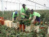 Dossier Pédagogique - Commerce équitable au Kenya | Commerce équitable et durable | Scoop.it