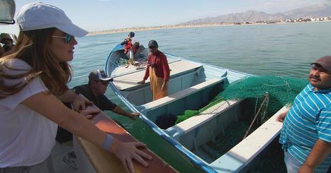 The Last Vaquitas   Aquaculture Directory   Scoop.it