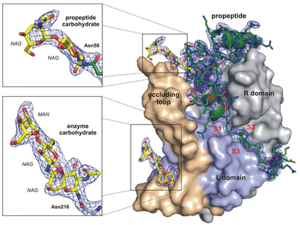 First-ever determination of protein structure with X-ray laser   Power of Protein Crystal Structures   Scoop.it