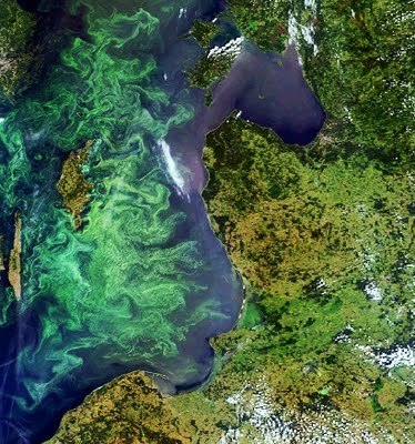 Bloom in the Baltic Sea | Geospatial | Scoop.it | GIS in Education | Scoop.it
